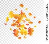 oak  maple  wild ash rowan... | Shutterstock .eps vector #1238486332