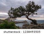 juniper on the edge of a cliff | Shutterstock . vector #1238493505