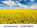 Field Of Rapeseed With...