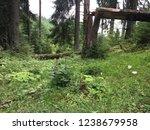 broken tree in the middle of...   Shutterstock . vector #1238679958