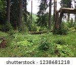 broken tree in the middle of...   Shutterstock . vector #1238681218