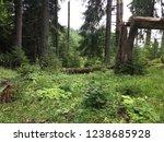 broken trees in the middle of...   Shutterstock . vector #1238685928