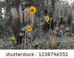 sunflowers in a garden with... | Shutterstock . vector #1238746552