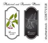 spindle  euonymus europaeus  ...   Shutterstock .eps vector #1238771518