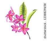 tropical floral illustration.... | Shutterstock . vector #1238829658
