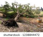 fallen tree  tree fell down... | Shutterstock . vector #1238844472