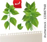 Highly Detailed Mint Plant