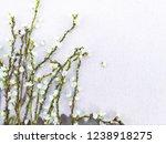 bouquet of flora. flower of... | Shutterstock . vector #1238918275