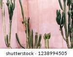 Plants On Pink Concept. Cactus...