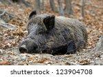 wild boar  sus scrofa  | Shutterstock . vector #123904708