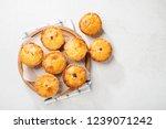 traditional australian mini... | Shutterstock . vector #1239071242