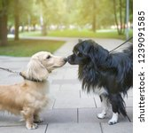 two dogs on a walk get to know... | Shutterstock . vector #1239091585