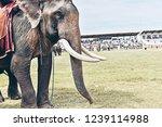 closeup of wonderful big strong ... | Shutterstock . vector #1239114988