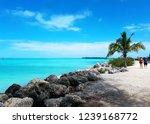 miami beach  florida  united... | Shutterstock . vector #1239168772