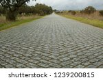 cobble stone road shot from low ...   Shutterstock . vector #1239200815