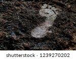 Human Bare Foot Step Print On...