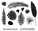 Vector Set Of Isolated Tropica...