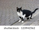 Stock photo black an white alley cat staring wary at the street 123942562