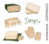 tempeh or tempe food vector.... | Shutterstock .eps vector #1239506212