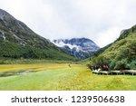 scene in daocheng yading... | Shutterstock . vector #1239506638