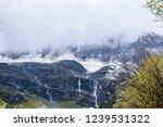 close views of the yangmaiyong... | Shutterstock . vector #1239531322