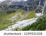 close views of the yangmaiyong... | Shutterstock . vector #1239531328