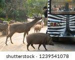 chiang mai  thailand   november ...   Shutterstock . vector #1239541078