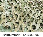 camouflage green mesh. abstract ...   Shutterstock . vector #1239583702