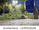the tree on the street fell and ... | Shutterstock . vector #1239632638