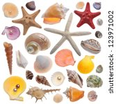Seashell Collection Isolated On ...