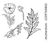 poppy flowers and leaves... | Shutterstock .eps vector #1239765802