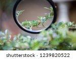 Focus magnifier zoom in green...