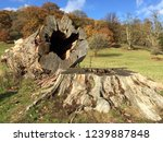 cross section of ancient felled ... | Shutterstock . vector #1239887848