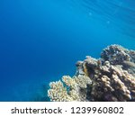 deep and beautiful blue sea and ... | Shutterstock . vector #1239960802