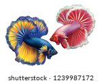 two siamese fighting fish ...   Shutterstock .eps vector #1239987172