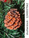 artificial pine cone in... | Shutterstock . vector #1240037062