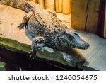 wildlife closeup portrait of a... | Shutterstock . vector #1240054675