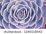 rectangular arrangement of... | Shutterstock . vector #1240118542