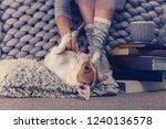 woman wearing cozy warm wool...   Shutterstock . vector #1240136578