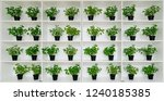 book case with plants. empty... | Shutterstock . vector #1240185385