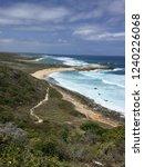 pointes des colibris  ... | Shutterstock . vector #1240226068