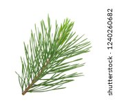 branch of pine isolated on... | Shutterstock . vector #1240260682