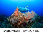 manta ray on a colorful soft... | Shutterstock . vector #1240276132