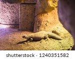 the lizard under the stone | Shutterstock . vector #1240351582