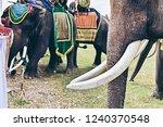 closeup of wonderful big strong ... | Shutterstock . vector #1240370548