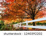 maples with leaves painted red... | Shutterstock . vector #1240392202
