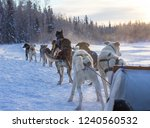 Dog sled in YellowKnife, Northwest Territories, Canada