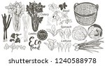 wooden crate and basket full of ... | Shutterstock .eps vector #1240588978