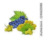 fresh  nutritious  tasty grapes.... | Shutterstock .eps vector #1240620088