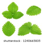 Set of strawberry leaves...